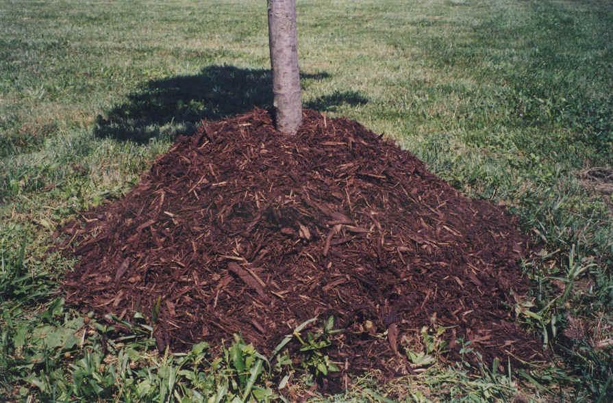 Mulch Volcanoes Gardening Mulching The Right Way