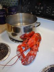 How to Cook a Perfect Lobster.  Click here for story