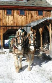 Sleigh Rides with Draft Horses at Stonewall Farm, New Hampshire