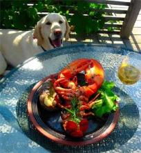 Lobsters, prepared on the grill...Cody approves! Click here for recipe...